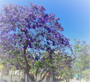 美しい花に国境はない