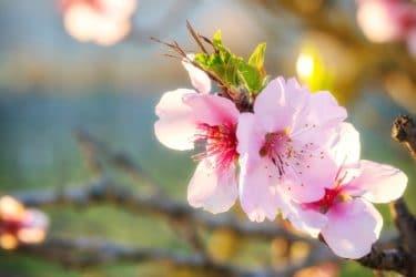 日本で春を迎える