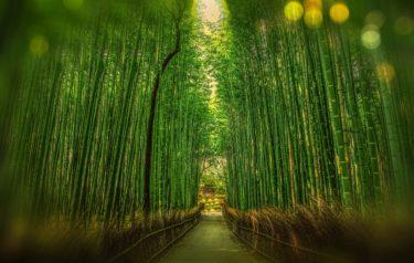 ふるさと、京都を想う