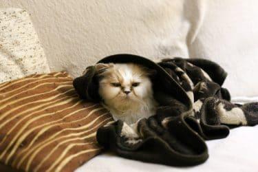 寒すぎる家