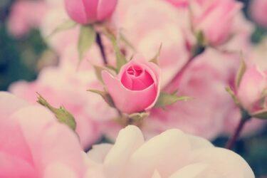 種が花咲くとき